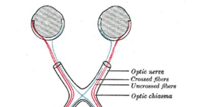 Chiasma opticum